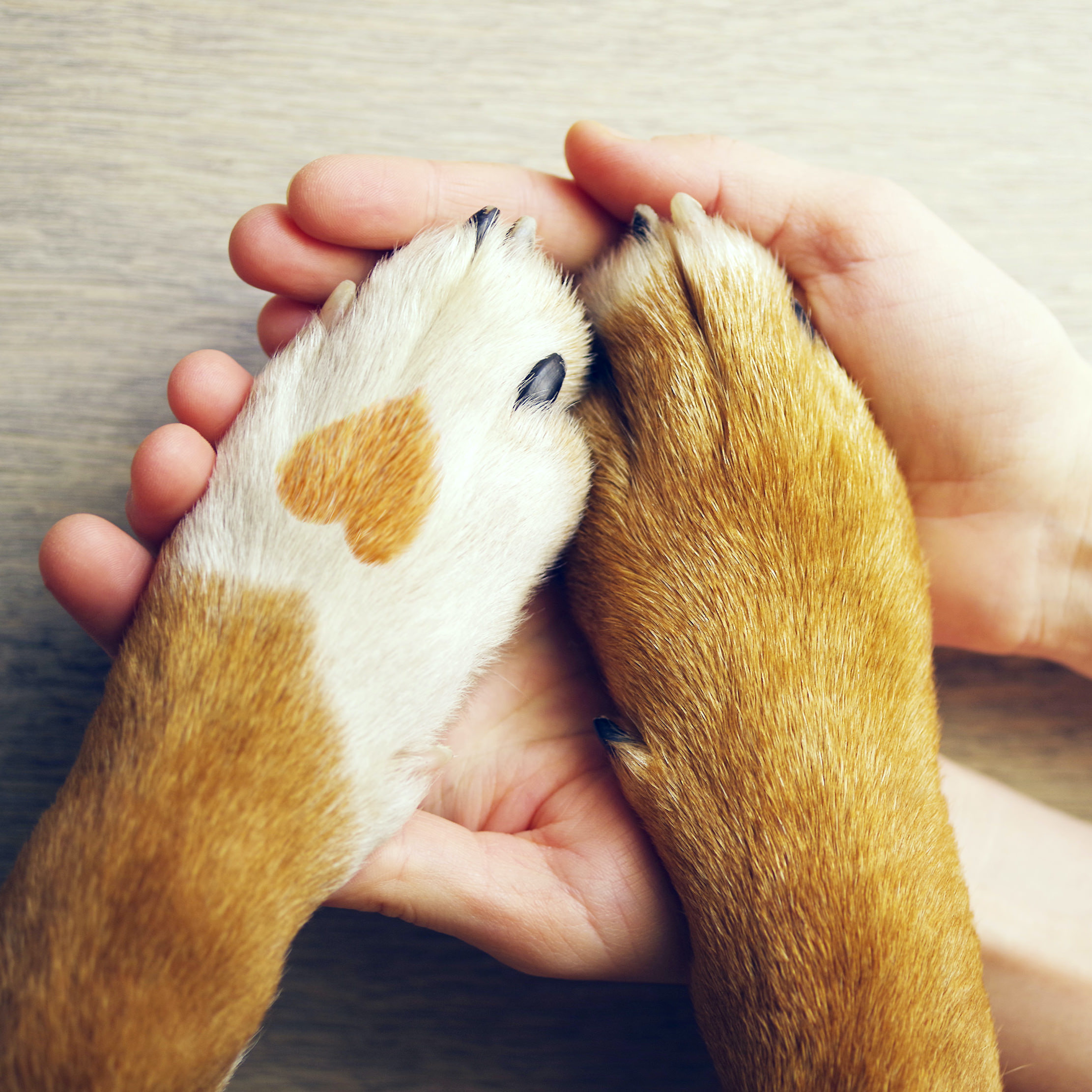 Hands holding dog paws